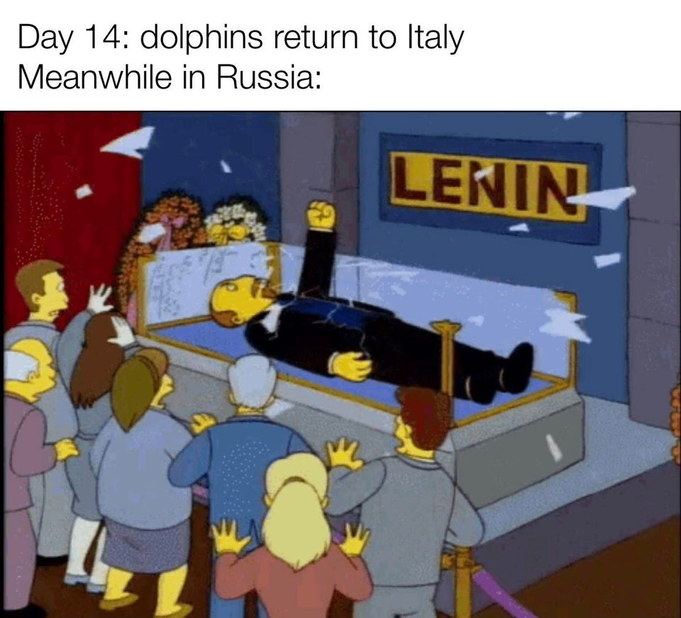Quarantine Effect: Dolphins spotted in Italy! Here comes Lenin #russia #QuarantineLifepic.twitter.com/UH10h2kR58