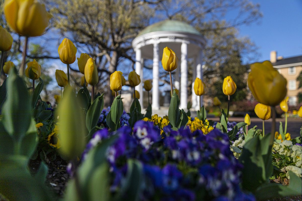 The dedication of #UNC's graduate students is essential to our success in teaching, research and service. They contribute both to solving the world's challenges and to training the next generation of leaders.   Thank you, Carolina graduate students, for all that you do. https://t.co/vZAXYPjlFr