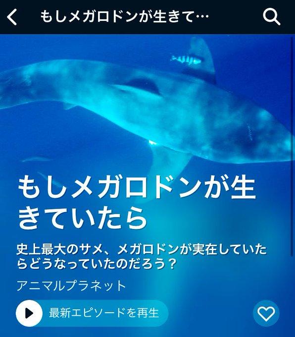 実在 メガロドン 【画像】古代生物メガロドンは実在する!現在の目撃情報や大きさ比較など伝説級の巨大サメの謎を徹底解説!