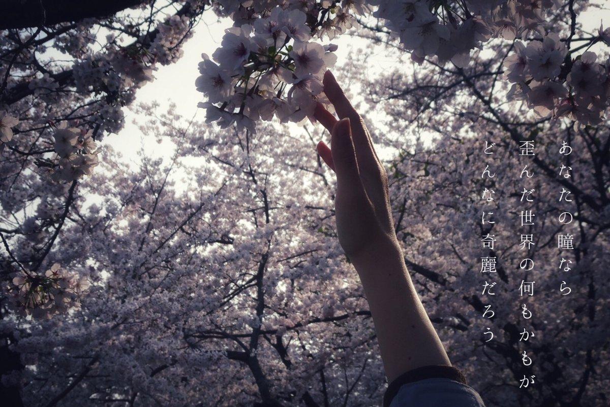 .  Aimer/Black Bird . #photo  #ファインダー越しの私の世界 pic.twitter.com/5Hd46bZhGQ
