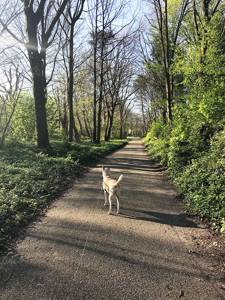 Muffin and I walking this morning. #Amsterdam pic.twitter.com/4bQvCkGmAw
