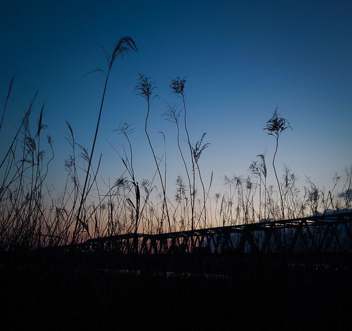 emotional #ファインダー越しの私の世界 #写真撮ってる人と繋がりたい #夕焼けpic.twitter.com/mBDByu1imE