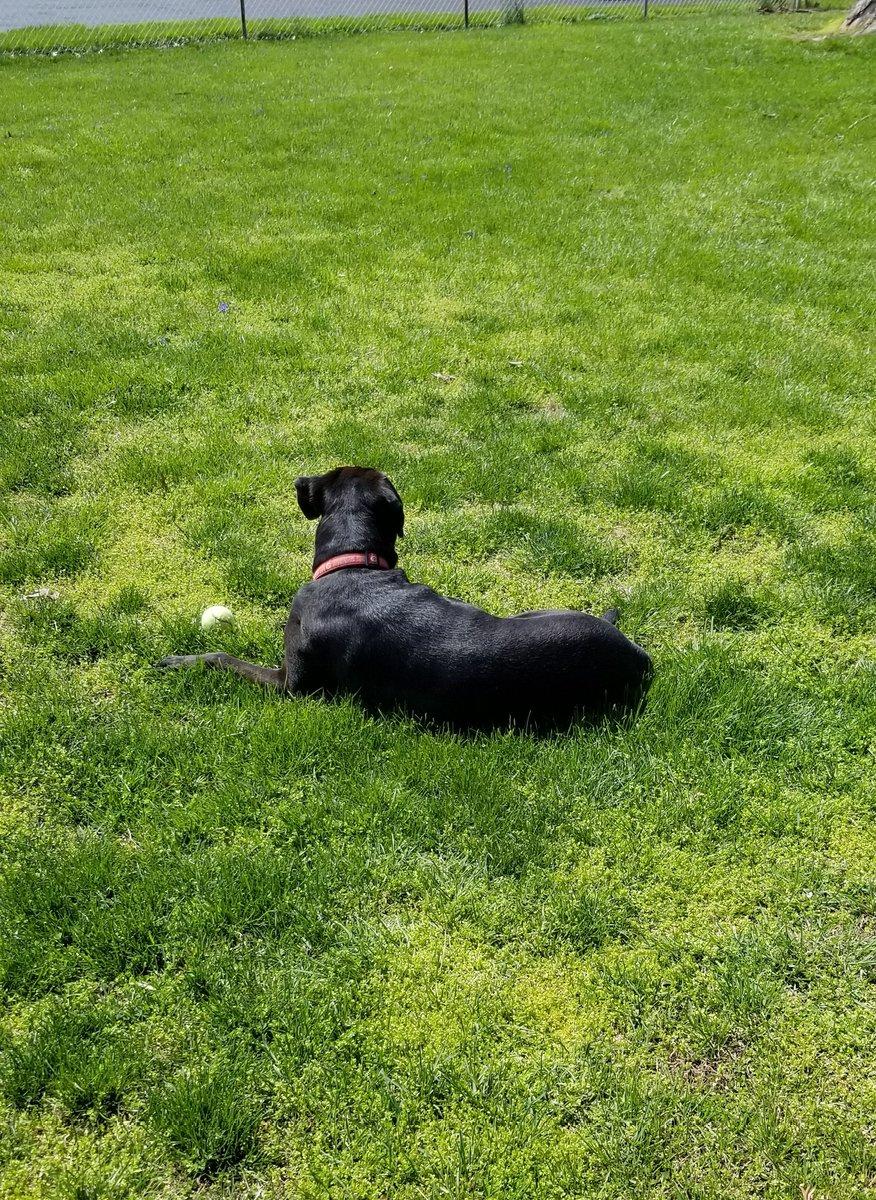Sunbathing  #dogsoftwitter #dogs #dog #doglife pic.twitter.com/6UrtzqJzKf