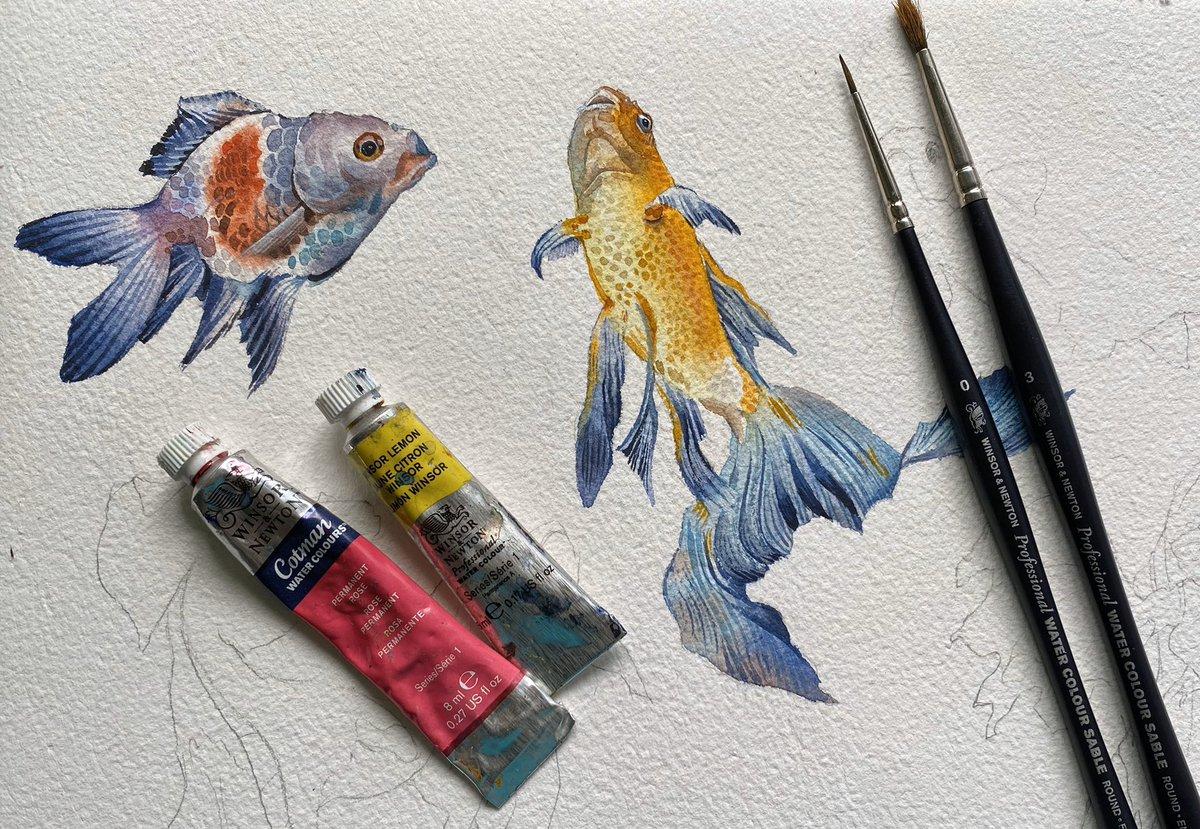 Small koi fish sketches in progress... . . . #Watercolor #watercolour #art #painting #fish #koi #carp #winsorandnewton #illustration #sketch #drawingpic.twitter.com/tuPKLL9smw