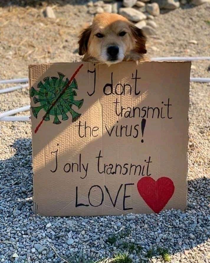 Instagram Tags -  #veganNews #veganinformation #veganteach #veganpower #veganlslove #veggies #vegan #vegans #vegancommunity #ruvegans #veganispossible #plantbasednews #dogs #plantbased #cruelty #ethicalvegan #veganfriendly #veganworld #newvegan #veganInspiration #plant #animalpic.twitter.com/8KwhRemUwA