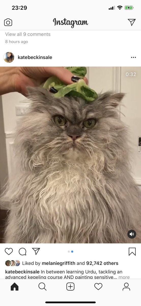 Some good news- Greg Davies @gdavies looks like Kate Beckinsale @KateBeckinsale cat. https://t.co/FALBNuZiml