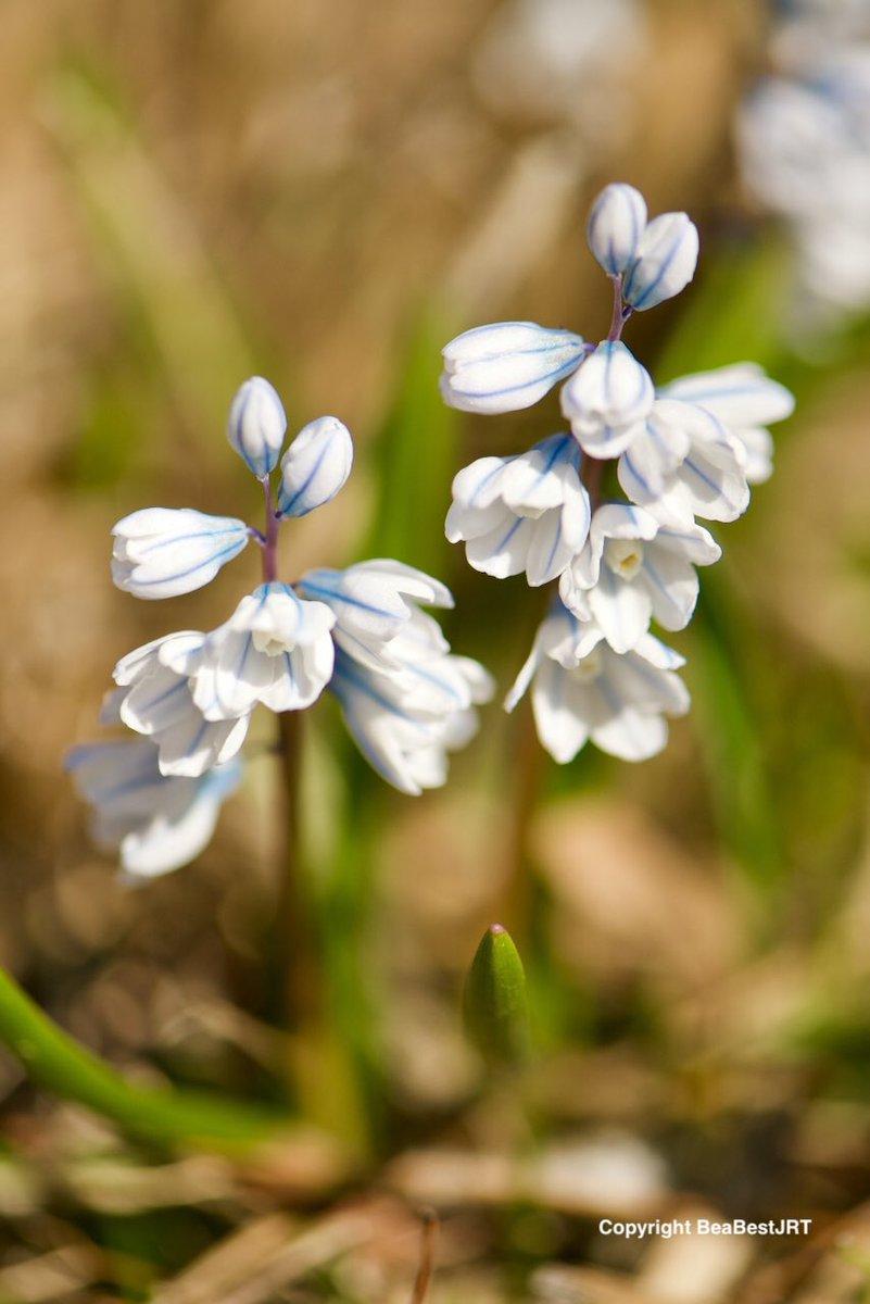 I just hope that you're okay. #photography #flowers #hope #ThePhotoHour #StaySafeStayHome  #HamOntpic.twitter.com/iw0jkUzUSc