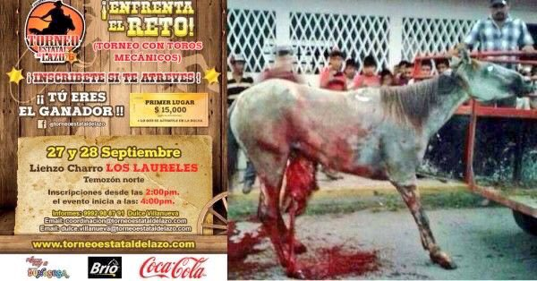 """& thisis """"Nice"""" Compared to what Yucatan Considers """"Entertainment""""  Eviscerating LIVE HORSES MAN Has to be the MOST VILE """"creature"""" Alive@YucatanHolidays @TheBrooke @HSIGlobal @theyucatantimes @tsouthamerica @SouthAmTravel @southamerica @southamerica pic.twitter.com/cR3X8V1b1u"""