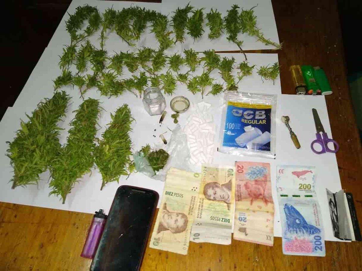 Importante secuestro de cannabis sativa en los valles calchaquíes  Noticia: