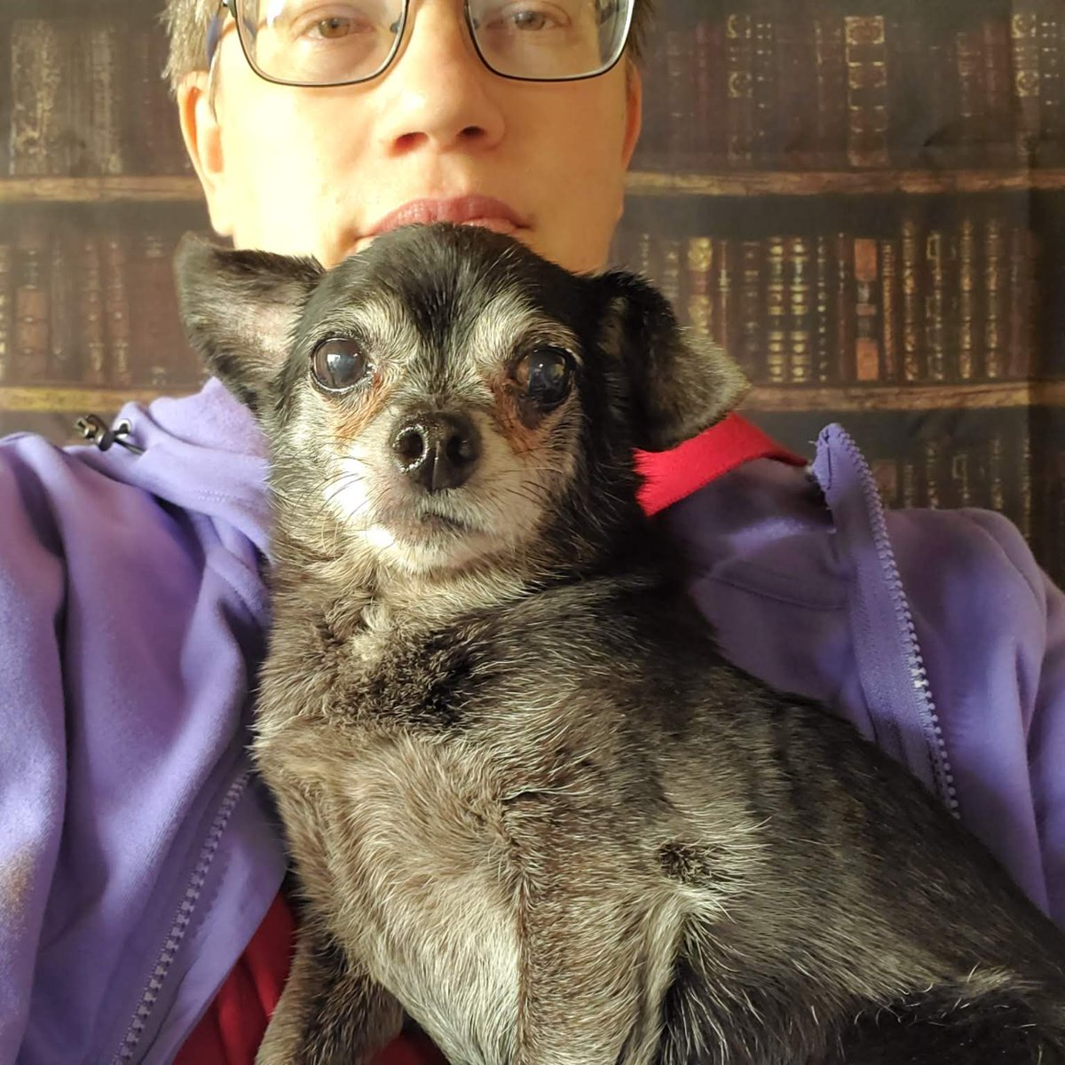 """The Human Scribe has started taking the dogs' photo backdrops and putting them behind her in her """"office"""". Today she and Remy worked from The Library.  #fun #dogsinmanagement #dogsoftwitterpic.twitter.com/YAidGUSsYq"""