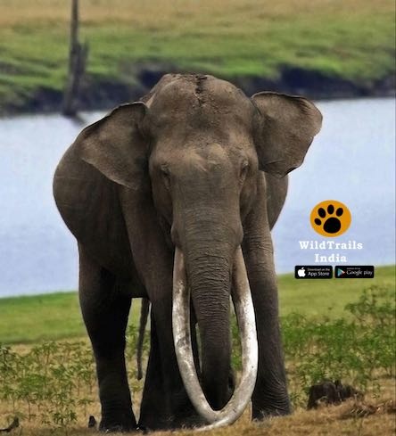Two elephants found dead in Cauvery River | Mysuru News -  (For global wildlife news, download WildTrails (Android & iOS) http://onelink.to/gtf6j9)pic.twitter.com/qCgHs3RfMT