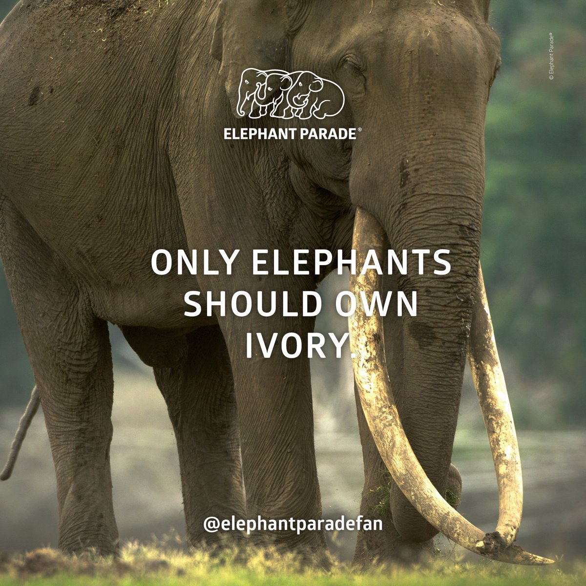 Only elephants should own ivory.  #WednesdayWisdom⁠ ⁠⠀ ⁠⠀ #elephantparadefan #elephantstatue #elephantparade #elephants #elephant #saveelephants #elephantlove #elephantconservation #elephantparade #exhibition #art⠀pic.twitter.com/BkJm0y7AFn