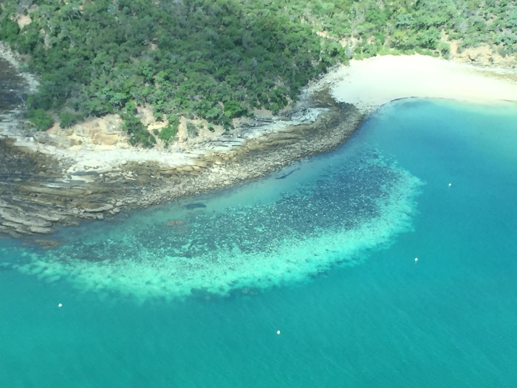 Widespread damage: Great Barrier Reef suffers mass coral bleaching event