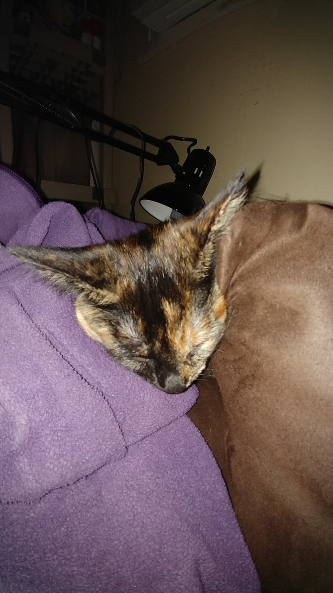 Somehow I became one wiff Da sofa as a bebie Meowpurrs #batcat pic.twitter.com/LhCkgG3kXp