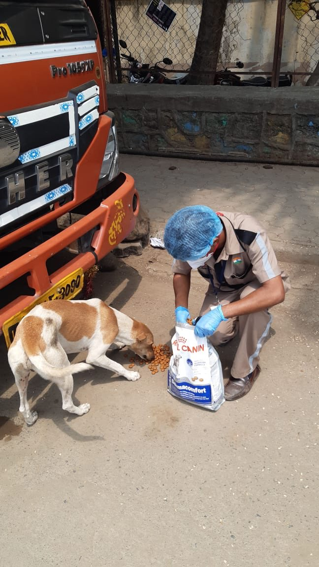 Some angels dont have wings !! @amtmindia with @royalcanin.india We seek your blessings & support for the staff. Donate via amtmindia.org/donate/ Or Gpay : 9819380310