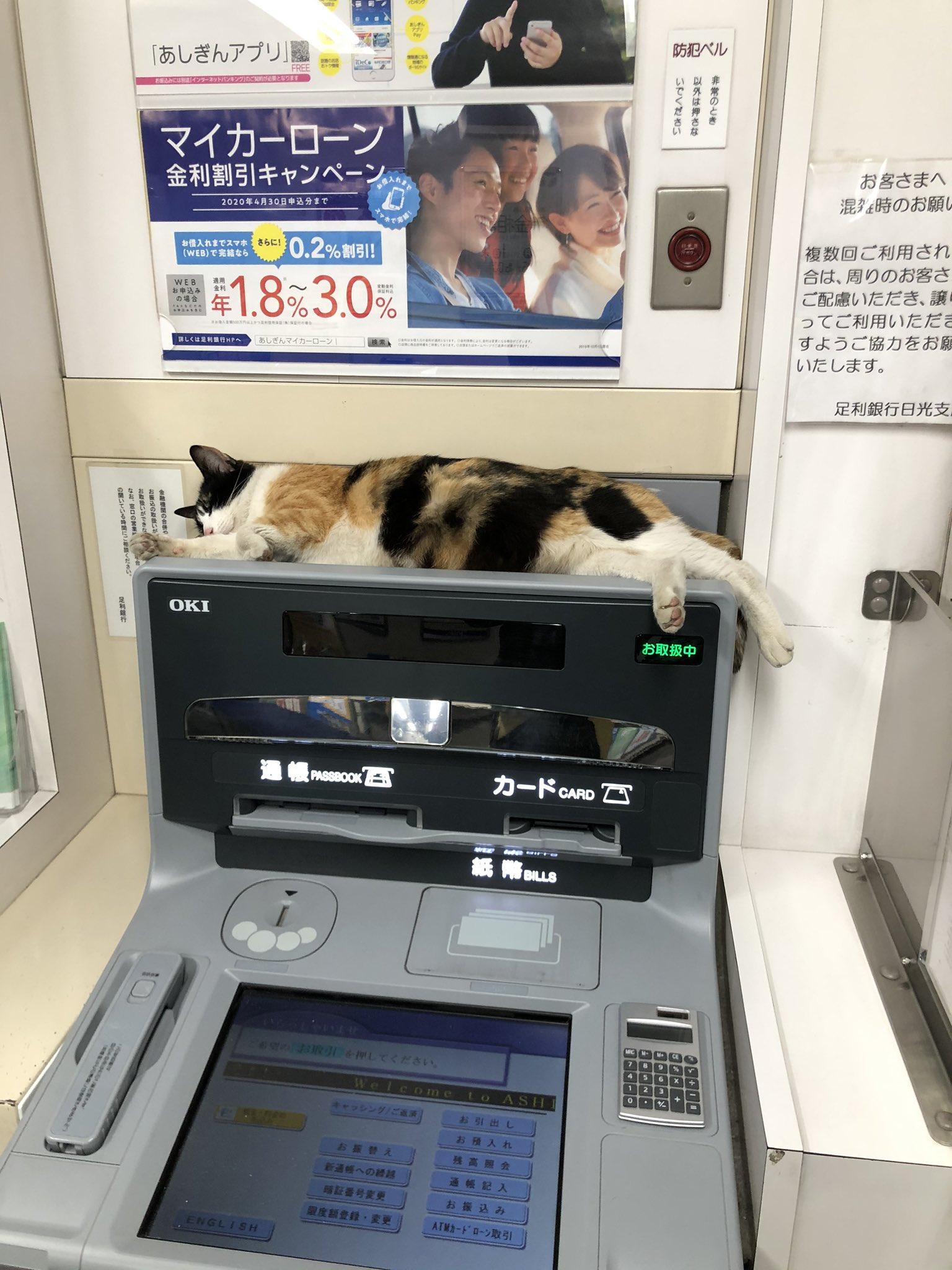 今夜もまだ、ヌコが居ります。 足利銀行日光支店🏧