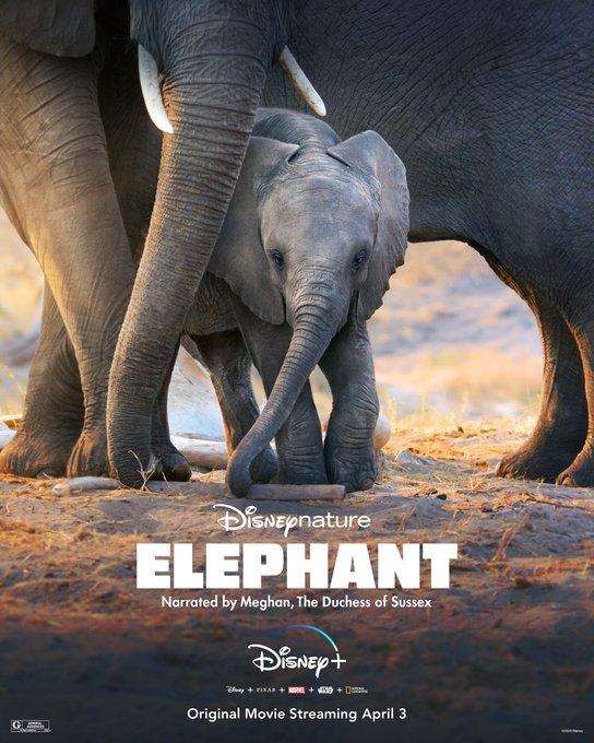 Éléphants / Sur la Route des Éléphants [Disneynature - 2020] EUC0dXLVAAYpo6Y?format=jpg&name=small