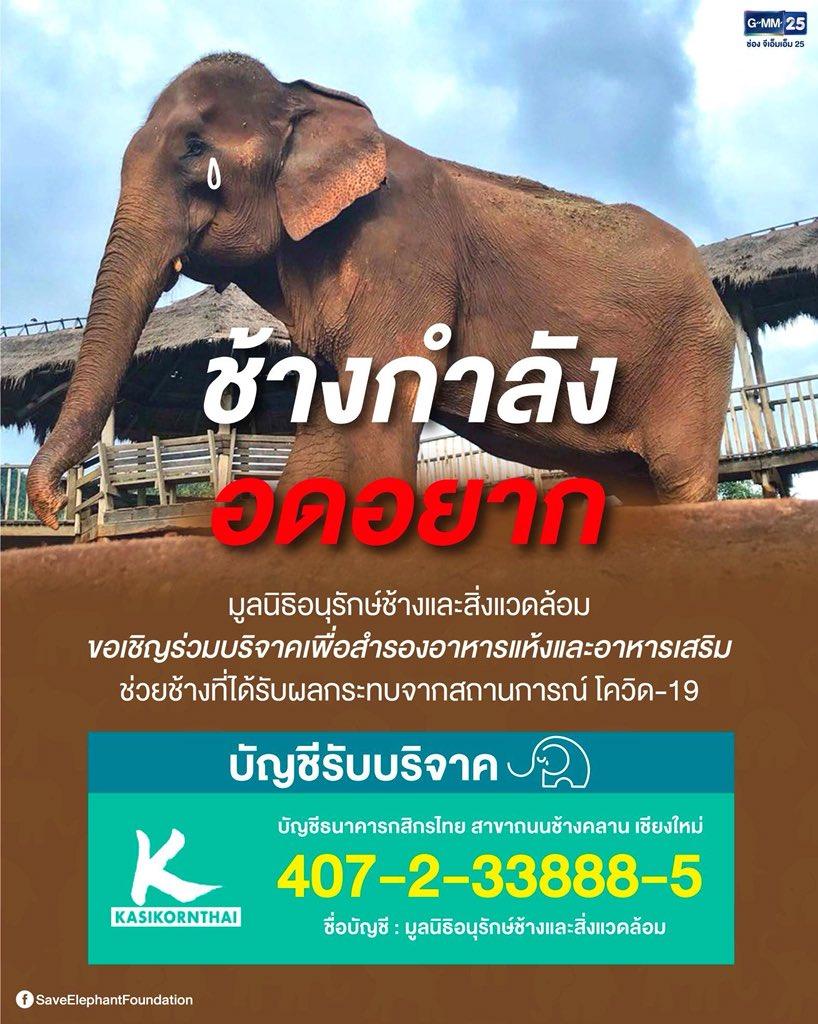 มูลนิธิอนุรักษ์ช้างและสิ่งแวดล้อม Save Elephant Foundation ขอเชิญร่วมบริจาค เพื่อสำรองอาหารแห้งและอาหารเสริม ช่วยช้างที่ได้รับผลกระทบจากสถานการณ์ โควิด-19  ...  ติดต่อสอบถามข้อมูลเพิ่มเติม ทิพย์สุดา 098 656 6685 คุณ ชลิตา 099 456 2629  #ช้างกำลังอดอยาก #SaveElephantFoundation pic.twitter.com/wZHL6qEJeS