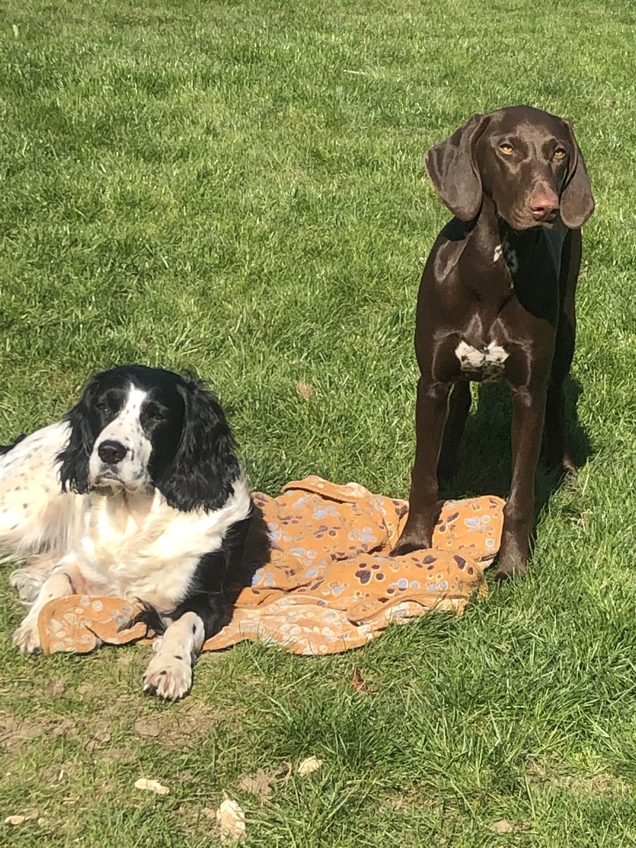 Asked my dogs if they would pre-save my single before it drops tomorrow. Think they're getting sick of me asking tbh.  http://www. bit.ly/rogue_jupiter     #stayhomebands #ThursdayThoughts #synthfam<br>http://pic.twitter.com/60NF99OlkR