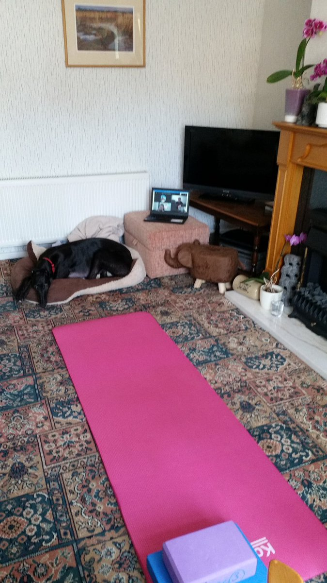 Just put on my first virtual #pilates class 4 @mariecurieuk #legacyteam colleagues using 'Teams'. Very weird! #teambuilding. Hope they enjoyed it? Even Pearl #greyhound got in on the act!
