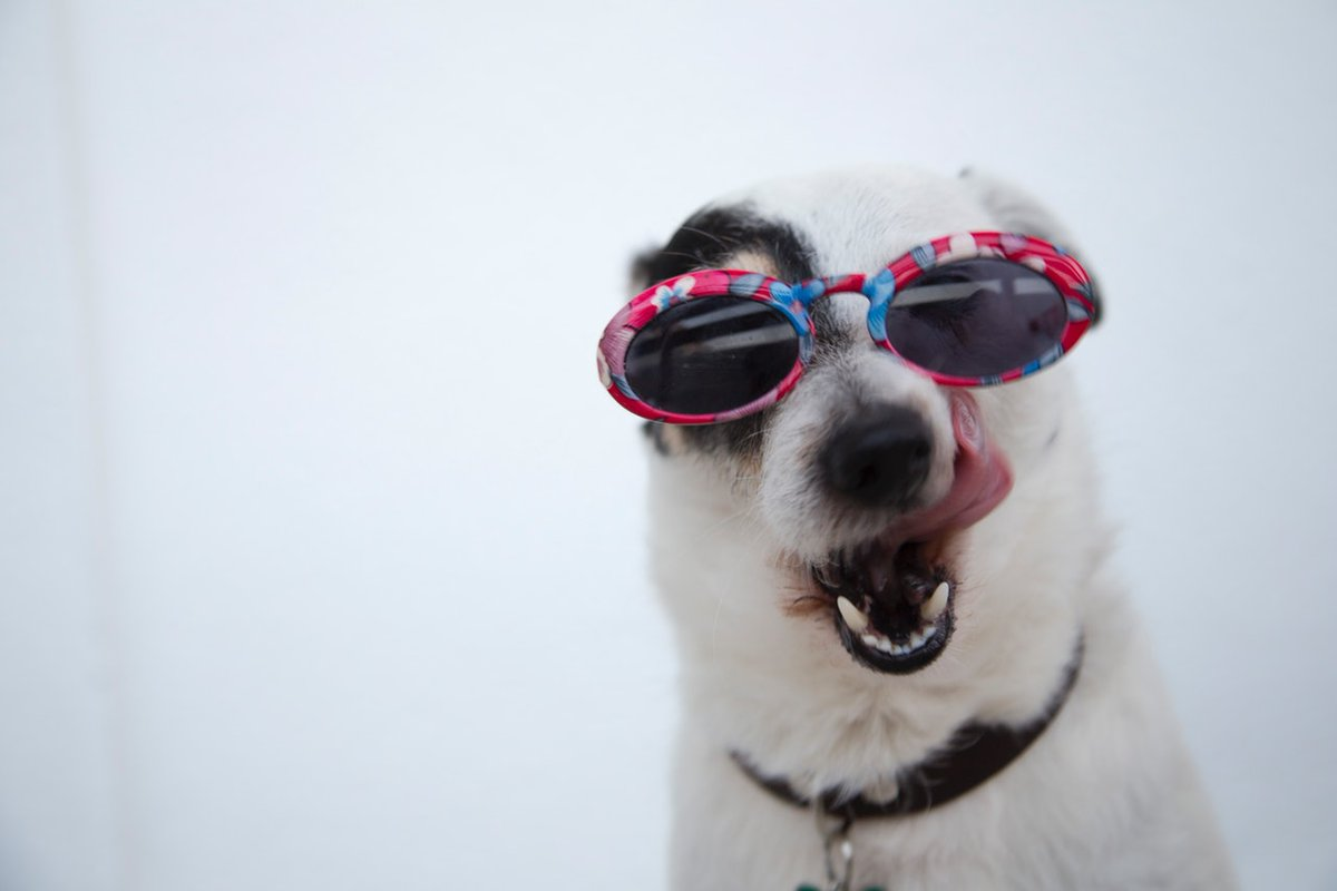 Does My Dog Need Glasses? https://gigglepets.net/does-my-dog-need-glasses/ … #gigglepets #doglover pic.twitter.com/48xF78zVmR