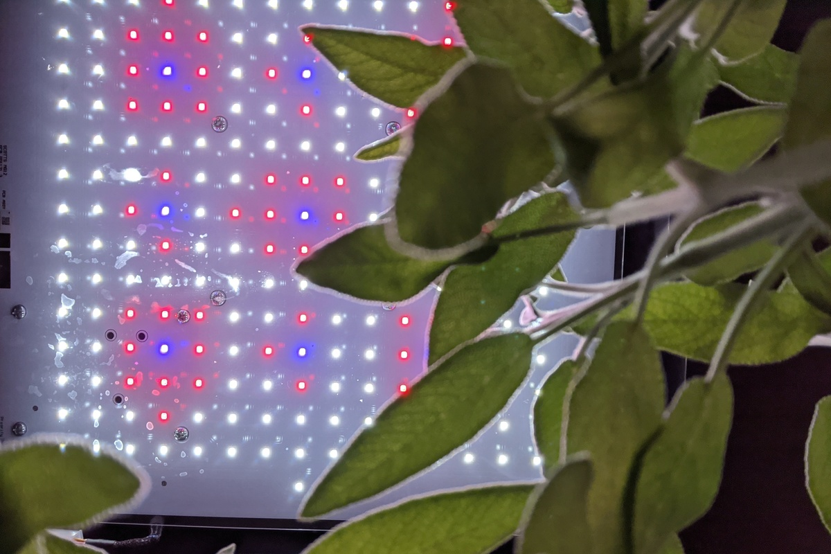 These are the LED lights used to help plants grow in this indoor growing system. #smarthometech #technews  http://cpix.me/a/94389867pic.twitter.com/Fj8Ivk9EAf