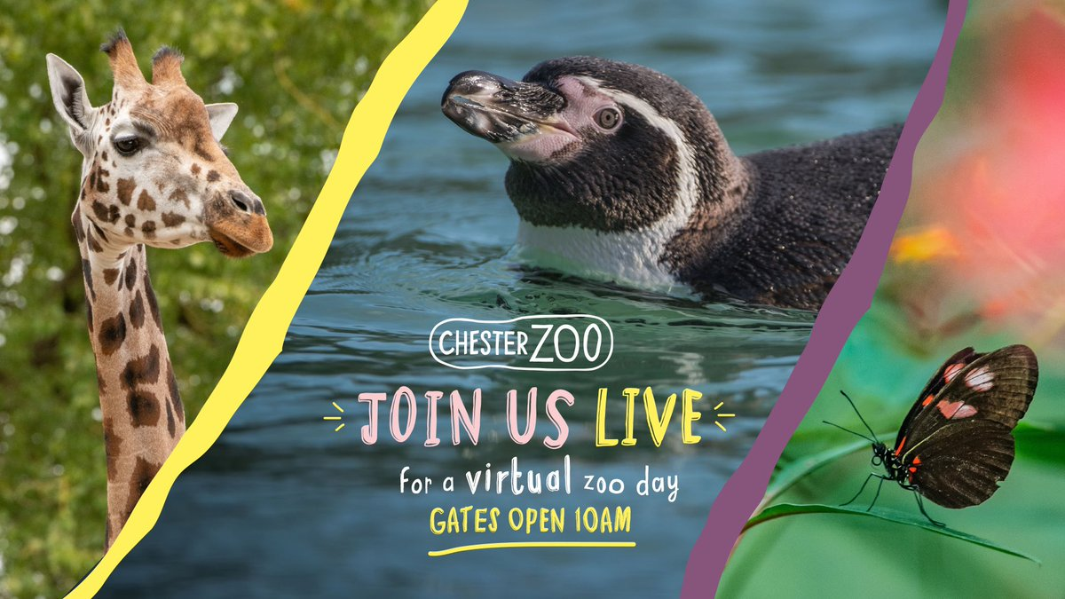 Chester Zoo (@chesterzoo) | Twitter