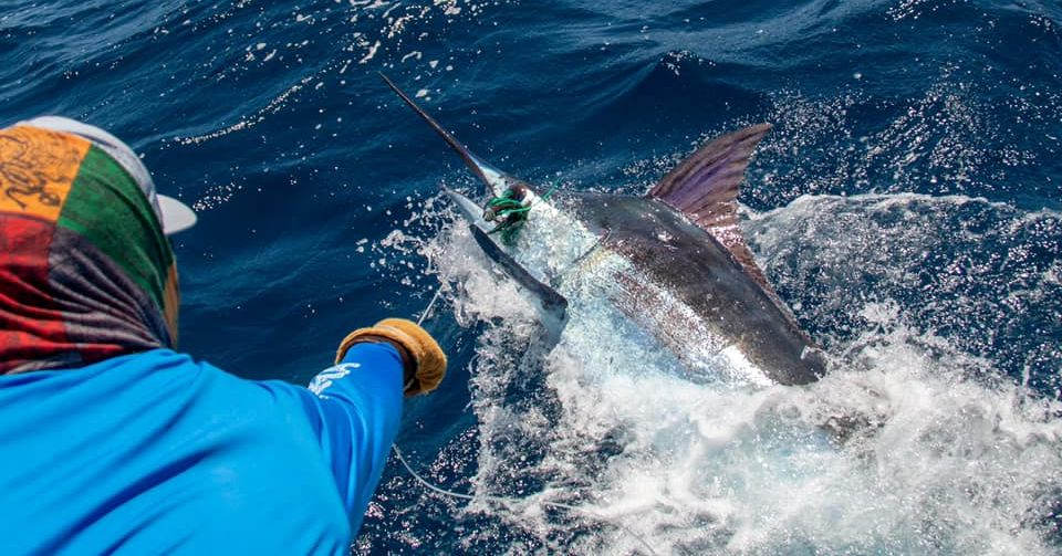 Cape Verdes - Hebe went 1-1 on Blue Marlin.