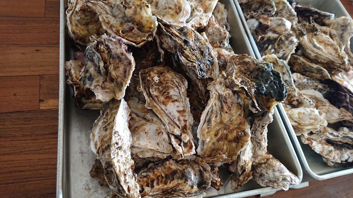 丹後の友達から大量の牡蠣が届いた… でかいし大量!!!!!! #どこでも料理 #オガトモ #出張料理 #ケータリング #丹後 #牡蠣 #全国 #東京pic.twitter.com/t0dV6tWSPQ