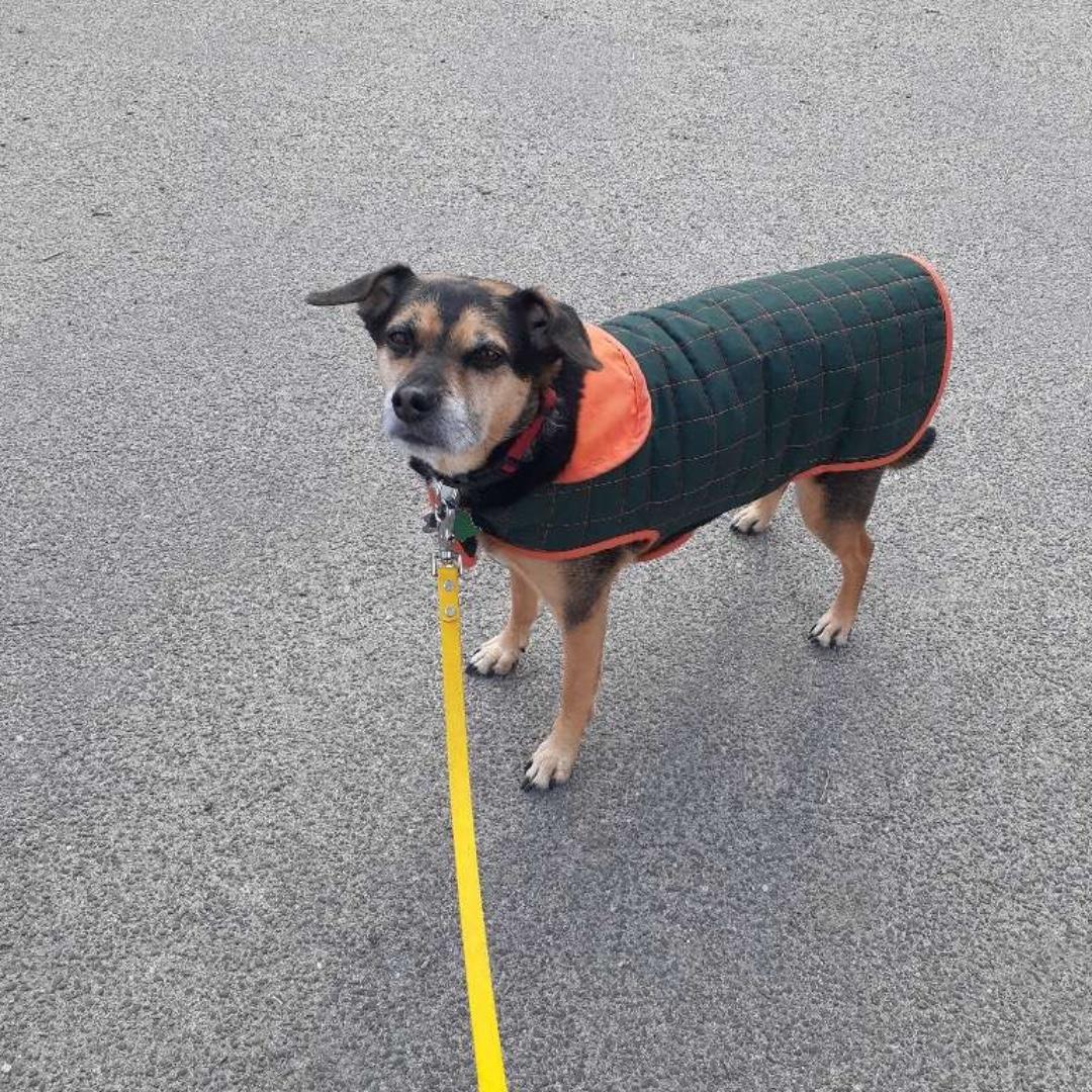 Finn wishes you a happy end of the day! #mixedbreed #maythepawsbewithyou #lukedogwalker #dogwalkeruws #happydog #uws #doggy #doggo #furbaby #dogcity  #puppy #puppylover #ilovedogs #sweet #whatabeauty #nycitydog #sweetdoggo #endoftheday #cutedog #cutepic #dogsofinstagram
