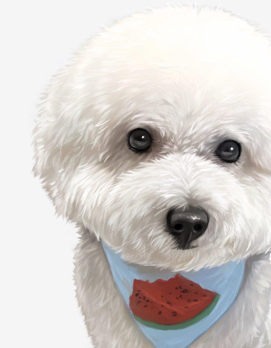 おはようございます まもなく完成です . #アート #犬 #ふわもこ部 #愛犬 #わんこ #犬の肖像画 #ペット #いぬすたぐらむ #ワンコ #犬のいる暮らし #いぬら部 #いぬバカ部  #犬バカ部 #犬派 #犬の絵 #犬のいる生活  #ビションフリーゼ #bichonfrise #油絵 #procreate pic.twitter.com/VKsZGRwP6b