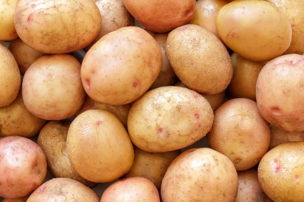 Картофель весна описание сорта фото отзывы