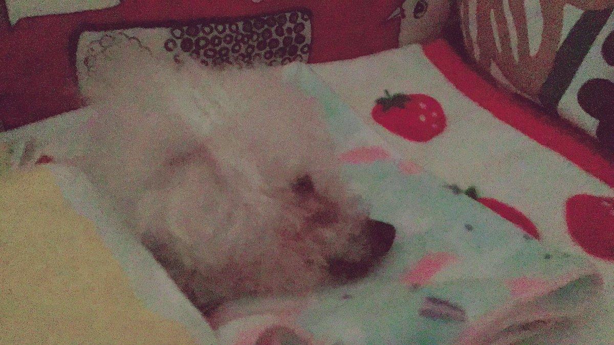 気持ち良さそうに寝てる おなかのすーすー上下 ほっとする<ほぅ  #秘密結社老犬倶楽部 #老犬介護 pic.twitter.com/eYlGd4AGga