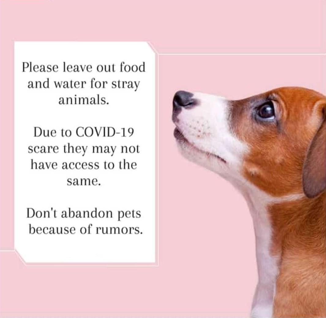 Please look out for stray dogs in your areas!   #doglover #cynophilist #savepetspic.twitter.com/mXzOOqFGQO