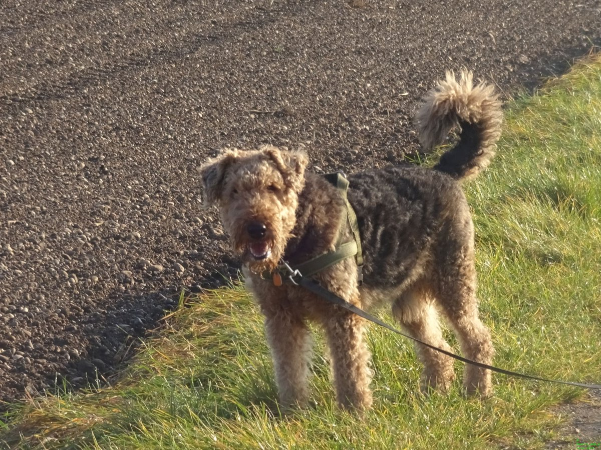 If you don't know how a dog expresses #happiness, watch this #picture! dogsarejoy pic.twitter.com/Q40cgLXdZ0
