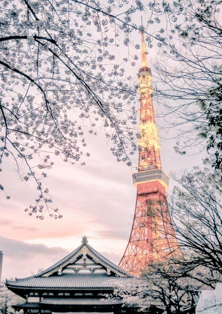 #東京タワー pic.twitter.com/4WUNGDH2ql