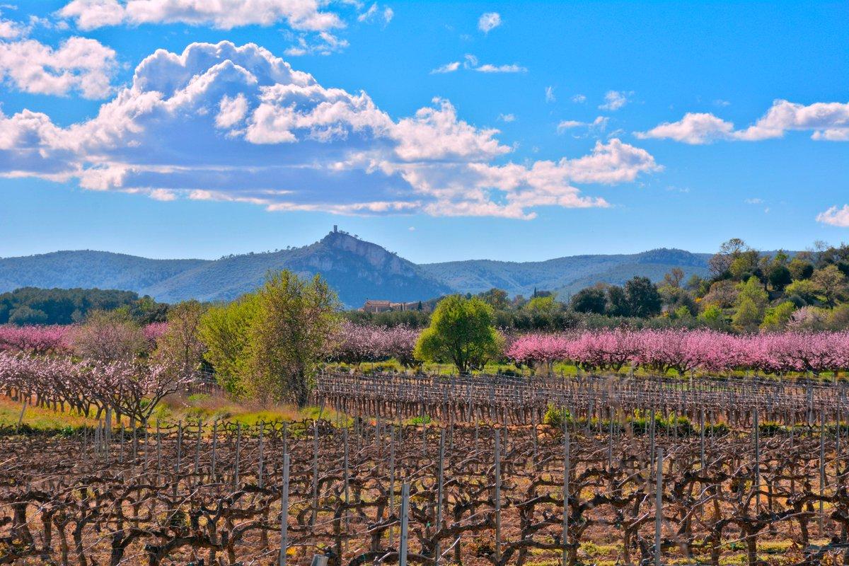 La primavera baña de colores el Penedès. Magnífica foto de @ngelaLlopFarr