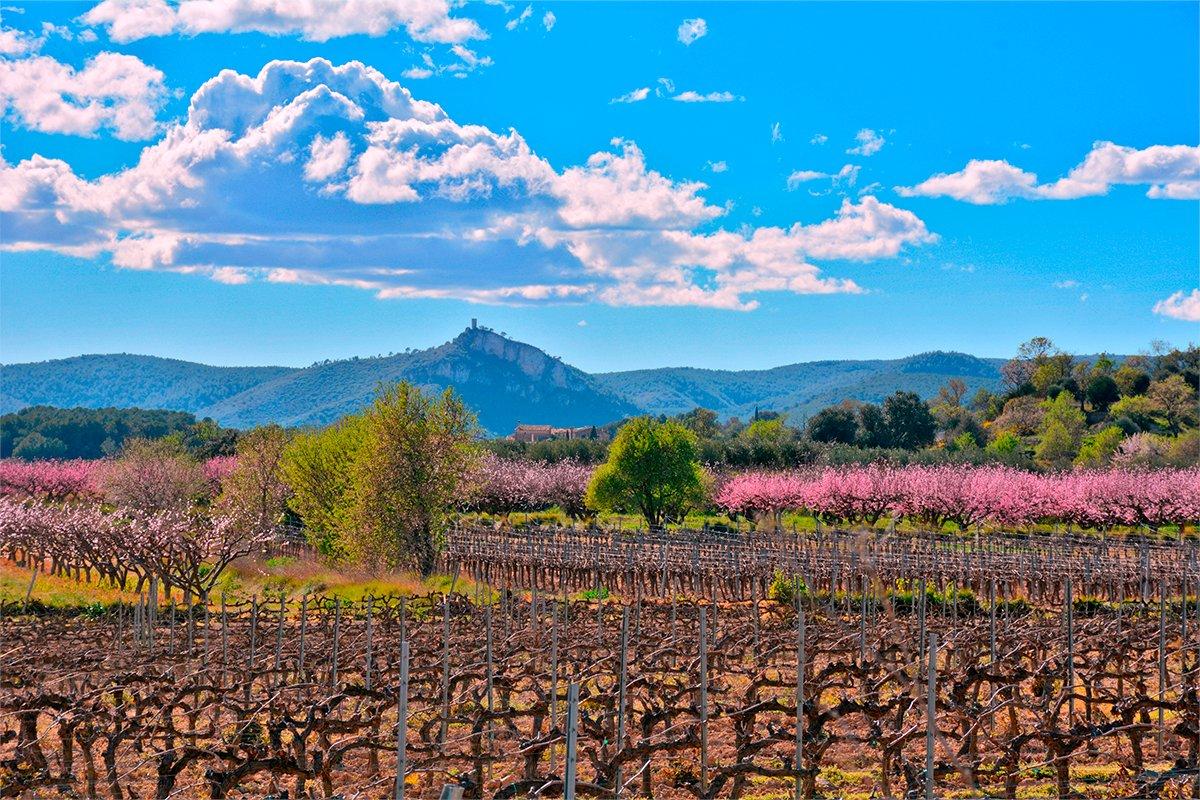 La primavera banya de colors el Penedès. Magnífica foto d'@ngelaLlopFarr