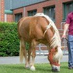 Image for the Tweet beginning: ❗Tipps der @VetmeduniVienna für PferdehalterInnen