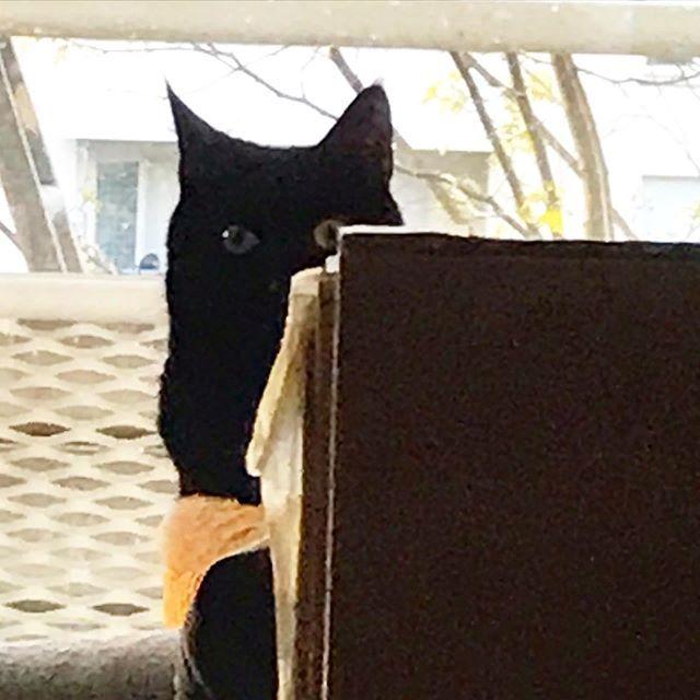 Oh, les humains, quand est-ce que vous repartez ? Vous squattez un peu trop là. C'est chez moi, ici. .. #confinement #chatcaché #hiddencat #covid_19 #pandemie #covid19 #coronavirus #teletravail #tara #viedechat #chat #cat #chatnoir #blackcat #catlife #cat…pic.twitter.com/dHrQsAOloT