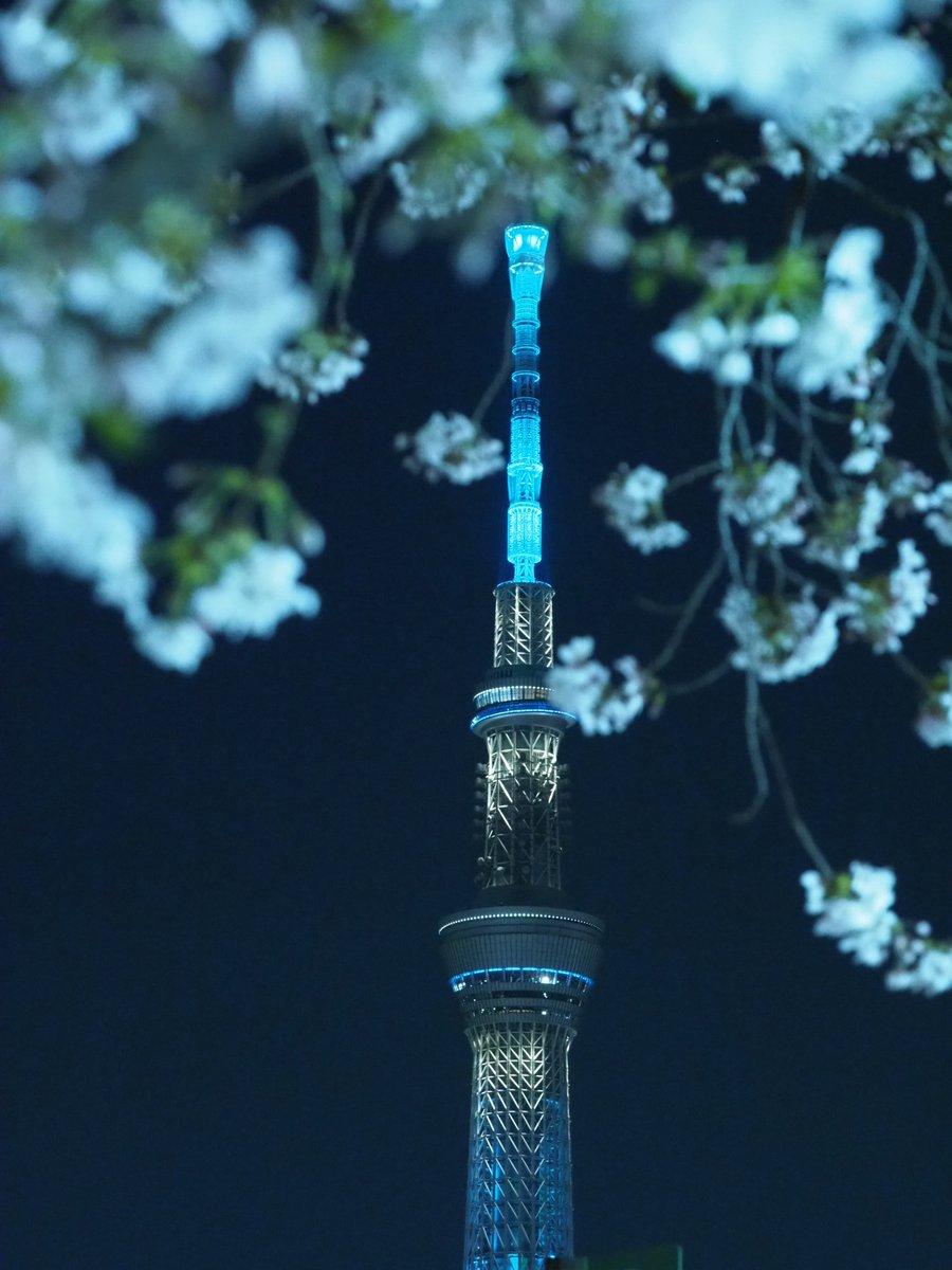 Tower and cherry blossoms  #ファインダー越しの私の世界ᅠ  #スカイツリー #東京タワー pic.twitter.com/GLHIKjwThJ