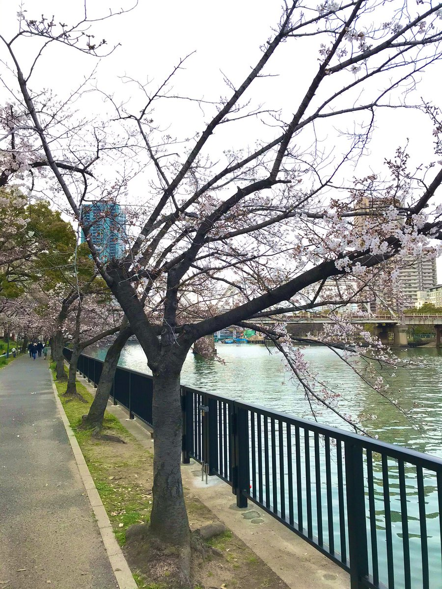 Cherry blossoms will bloom next year.  I tweet for those who wanted to come to Japan this year. #osaka pic.twitter.com/7z75wNE9gE