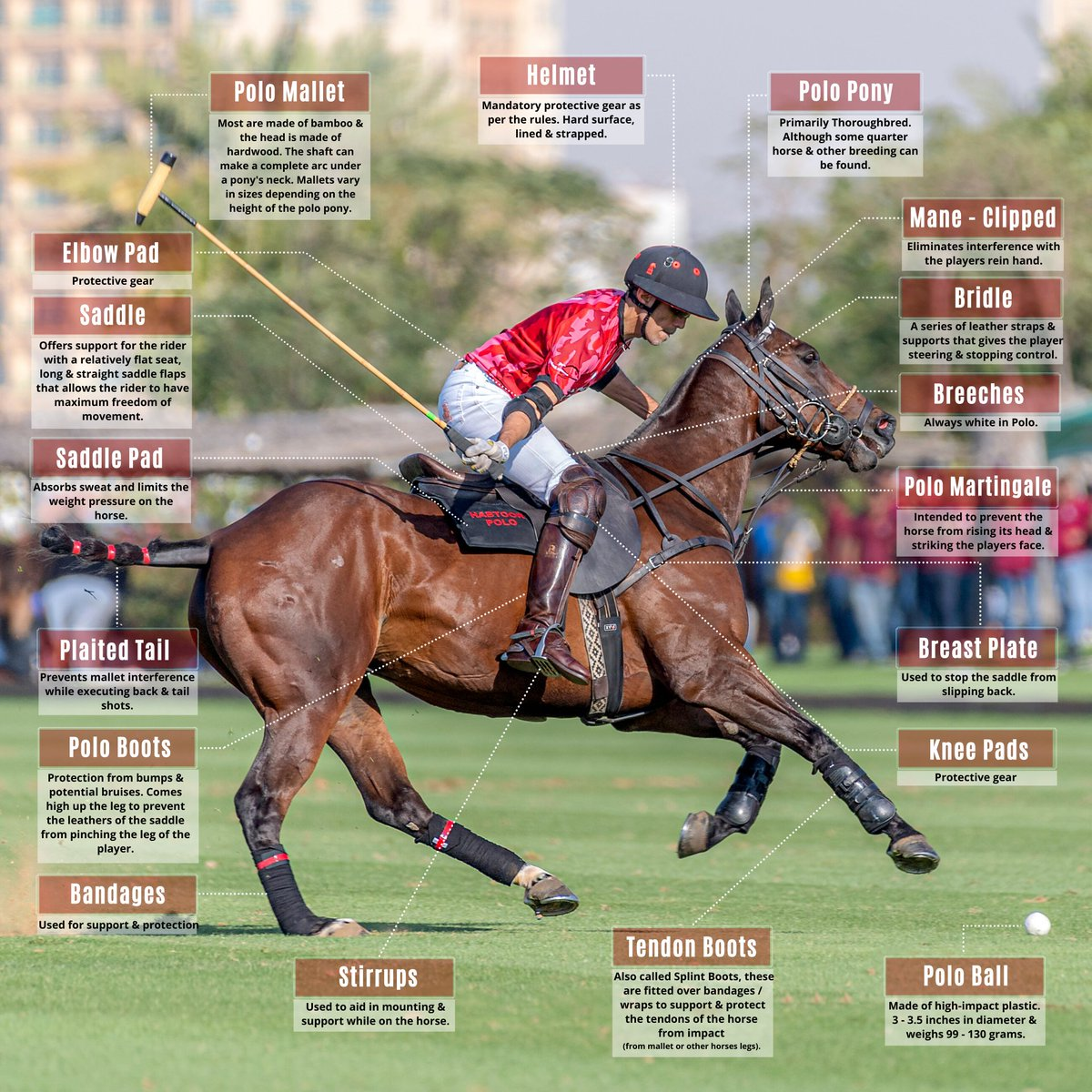 All geared up! Polo players & their ponies work together & must be fully equipped in order to play their best at each game. Here's a quick guide for those who are curious to learn more 😉  #Polo101 #SportOfKings #PoloGear #Safety #PoloPony #PoloPlayers #TackEquipment #PoloBasics https://t.co/jgNo8GMudx