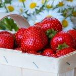 Image for the Tweet beginning: Es tiempo de #fresas 🍓