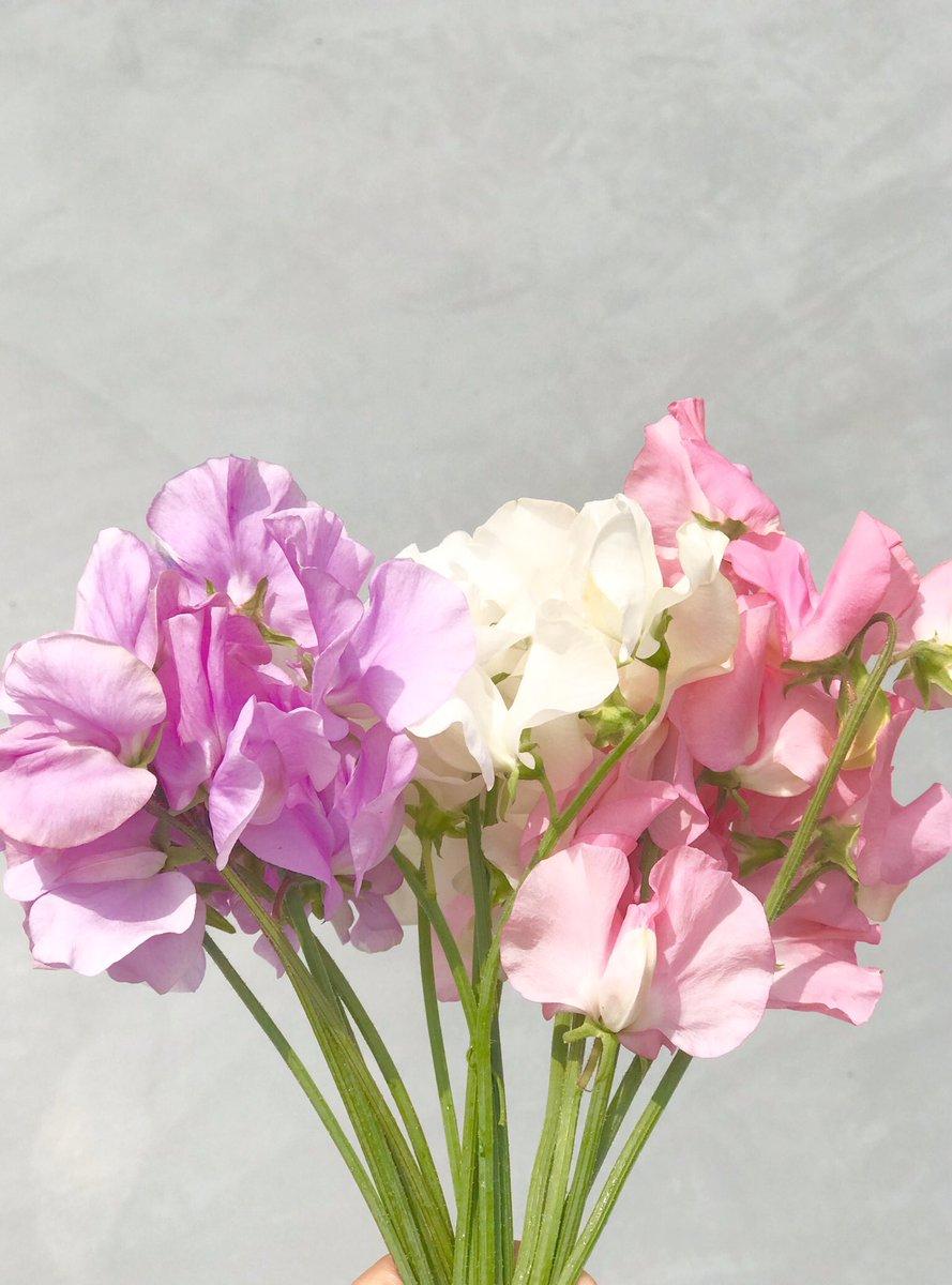 買い占めるべきは食料ではありません。買い占めるべきはお花です。お花を買うのです。長い時間家にいても彩り豊かで華やかな生活が送れます。心も気分も明るくなります。桜に限らずたくさんのお花を飾ってお家でお花見もいいですよー
