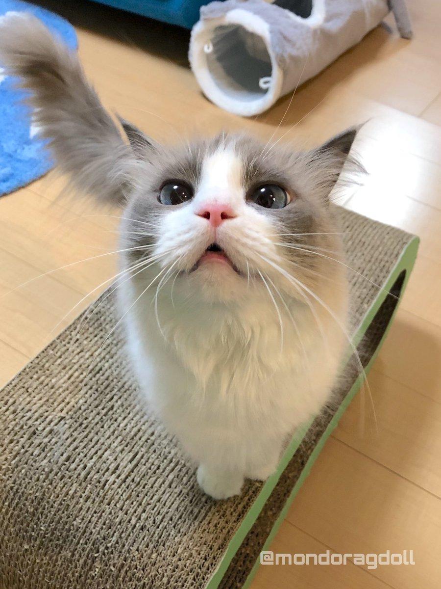 オバチャン志村さんのことすごく心配しています。志村さんもお医者さんも頑張ってください。志村さんはオバチャンがちっさい時のヒーローやねんて。みんなが志村さんの真似してたんやて。なまむぎなまごめなまたまご〜なまむぎなまごめなまたまご〜うわぉ!(猫談)