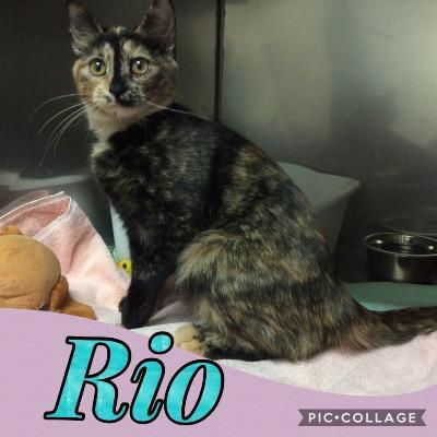 's Media: RT @SPCASwift: Rio is a 6 month old tortie girl. If you are looking for a kitten like her, call us