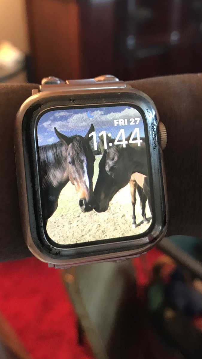 Oh, what a lovely watch face 4 my #AppleWatch & joining the star horses such as Rosie @chixrul111, @archiesauraus & @ClancyIrishboy All of these fabulous horses make my day & I get non-stop compliments when my watch is noticed which is often. #LoveHorses https://twitter.com/gloriousallianc/status/1243373372232192001…pic.twitter.com/UtZx9TYURW