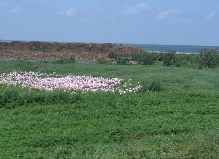 Flowers on the gulf out of Texas City. It's so green and lush.