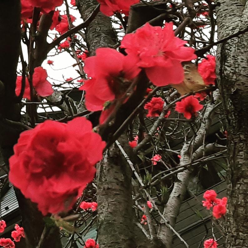 おはようございます!  朝昼euphoria、6時にはオープンします!  本日もよろしくお願いします  #euphoria #alcohol #bar #japan #tokyo #shinjuku #kabukicho #shotbar #歌舞伎町 #バー #おひとりさま #はしご酒 #飲み歩き #一人飲み #アルコール #新宿 #新宿東口 #ゴールデン街 #花園一番街 #昼飲みpic.twitter.com/ouEgUZ5vqk
